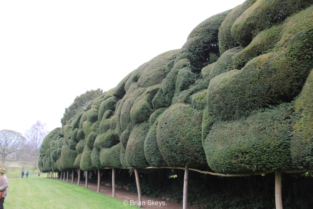 A Hedge on Stilts.