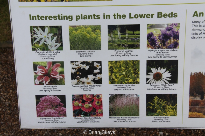 Some of the plants in the Italian Garden.