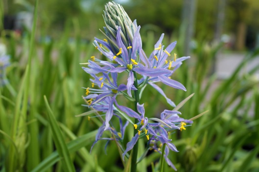 camassia-gallery-about-gallery-11